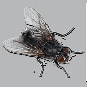 Titanium Fly Reel