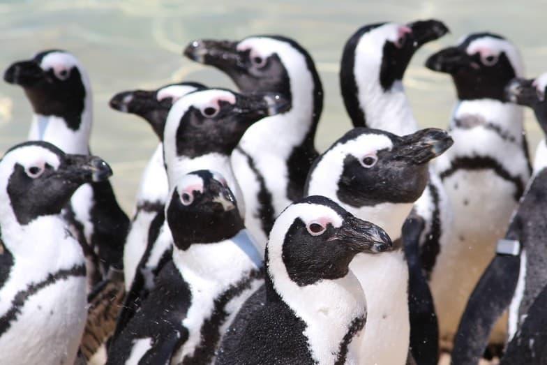 website design blue dolphin business development penguins